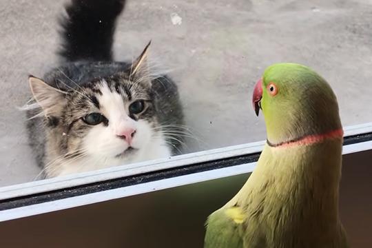 Играющий с котом в прятки попугай рассмешил пользователей Сети