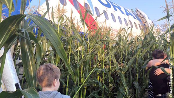 Чайки со свалок заставили пилота совершить чудо на кукурузном поле