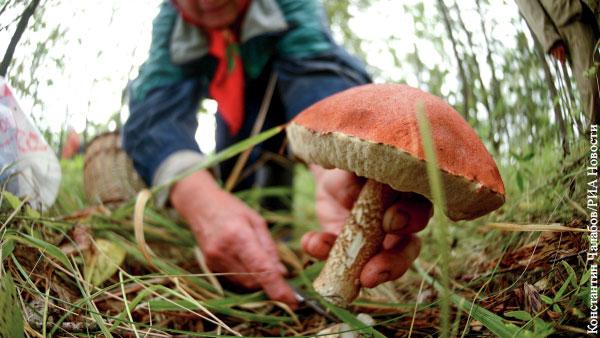 Почему в России начали массово пропадать грибники?